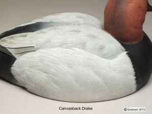 CANVASBACKDRAKE6