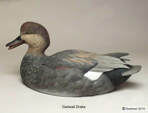 GADWALL DRAKE1