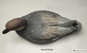 GADWALL DRAKE3