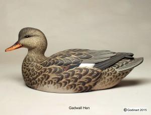GADWALLHEN1